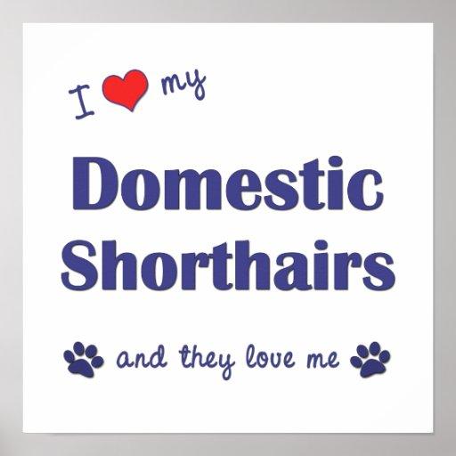 Amo mi Shorthairs nacional (los gatos múltiples) Posters