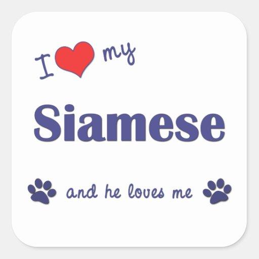 Amo mi siamés (el gato masculino) calcomanía cuadradas