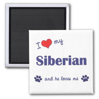 Amo mi siberiano (el gato masculino) imán cuadrado