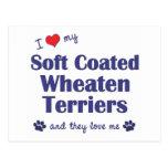 Amo mi Terrier de trigo revestido suave (los perro Tarjetas Postales