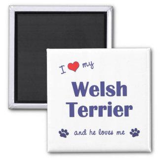 Amo mi Terrier galés (el perro masculino) Imán Cuadrado