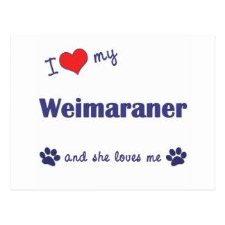 Amo mi Weimaraner (el perro femenino) Tarjeta Postal