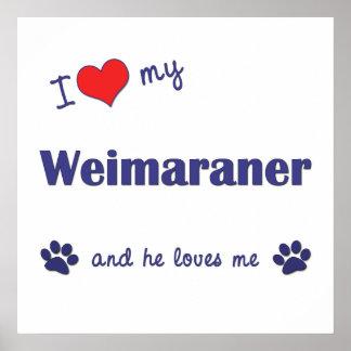 Amo mi Weimaraner (el perro masculino) Póster
