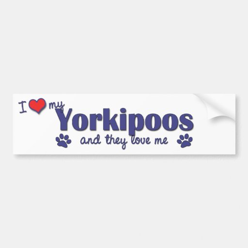 Amo mi Yorkipoos (los perros múltiples) Pegatina De Parachoque