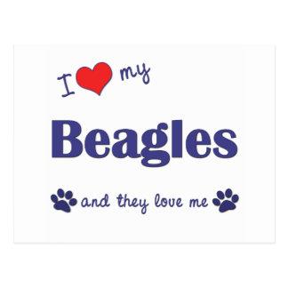 Amo mis beagles (muchos perros) postal