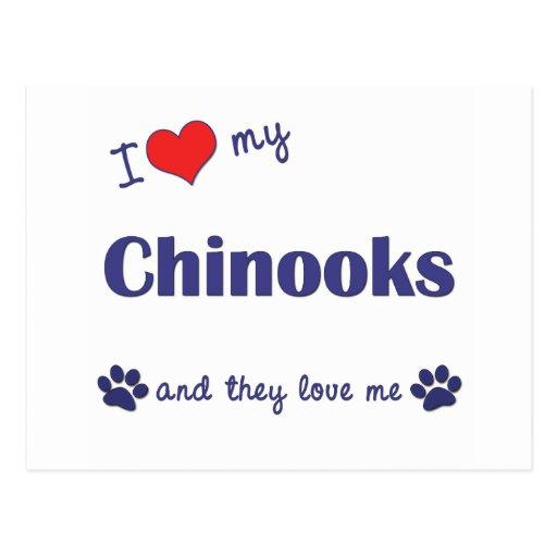 Amo mis chinooks (los perros múltiples) postales