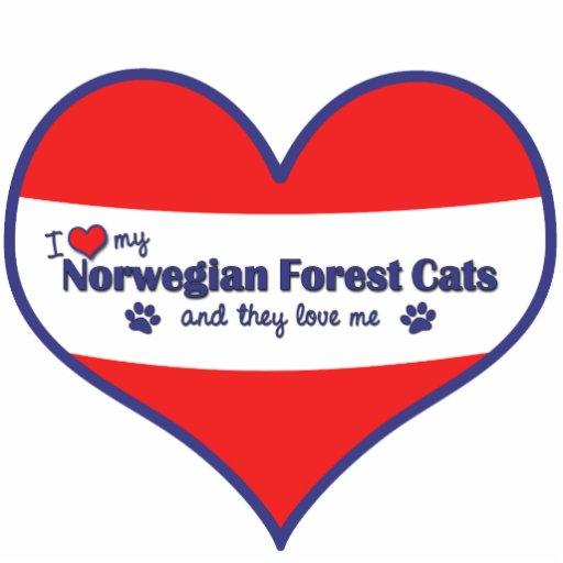 Amo mis gatos noruegos del bosque (los gatos múlti escultura fotográfica