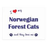 Amo mis gatos noruegos del bosque (los gatos múlti postales