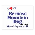 Amo mis mezclas del perro de montaña de Bernese (l Tarjeta Postal