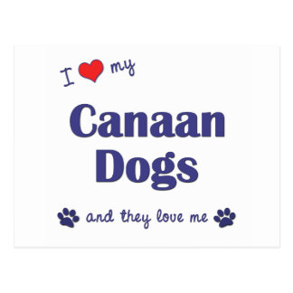 Amo mis perros de Canaan (los perros múltiples) Tarjetas Postales