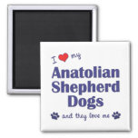 Amo mis perros de pastor de Anatolia (los perros m Iman