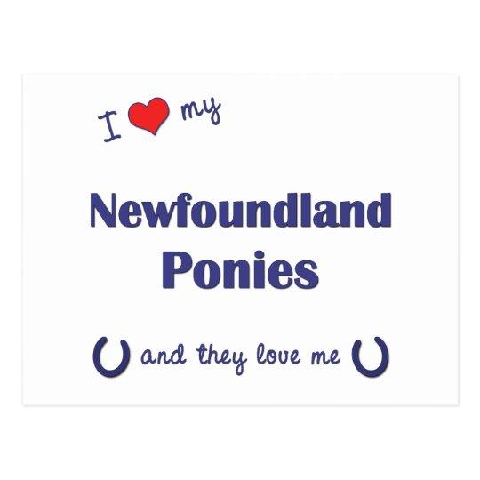 Amo mis potros de Terranova (los potros múltiples) Tarjeta Postal