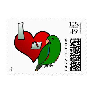 Amo mis sellos de Solomon Island Eclectus