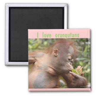 Amo orangutanes imán de frigorífico