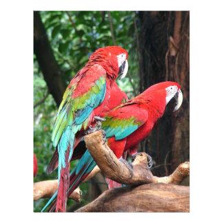 """¡Amo pájaros hermosos!  loros rojos y azules Folleto 8.5"""" X 11"""""""