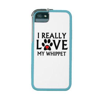 Amo realmente mi Whippet