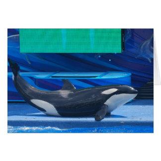 Amo tarjetas de felicitación de las orcas