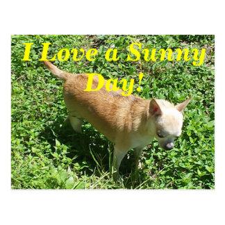 Amo una postal del día soleado