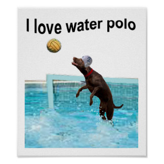 Amo water polo posters