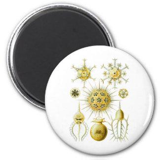 Amoeboid Protozoans 2 Inch Round Magnet