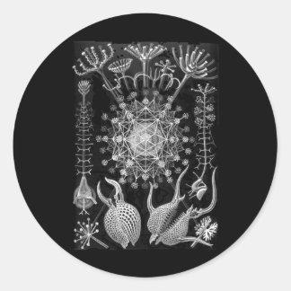 Amoeboid Protozoans Classic Round Sticker