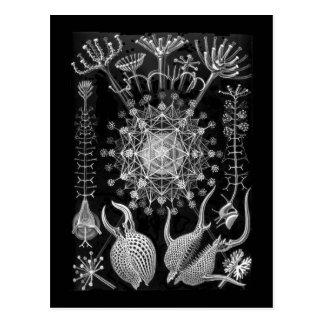 Amoeboid Protozoans Postcard
