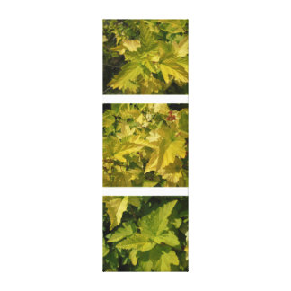 Among the foliage. Shades of yellow Canvas Print