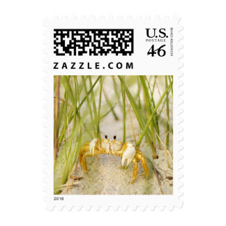 Among the Reeds Postage Stamps