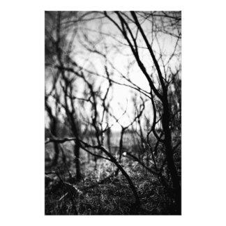 Amongst the Shadows Prints Photo Print