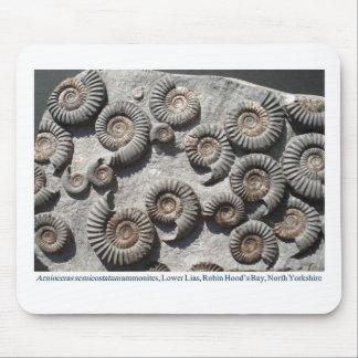 Amonitas fósiles multi del Lias más bajo Tapetes De Raton