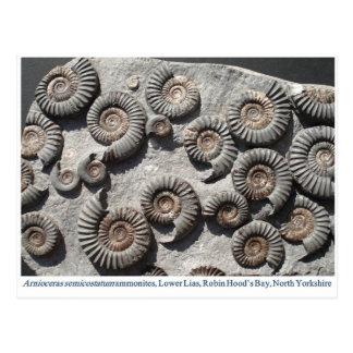 Amonitas fósiles multi del Lias más bajo Postal