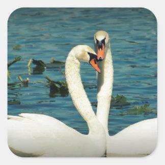 Amor 2 del cisne pegatina cuadrada