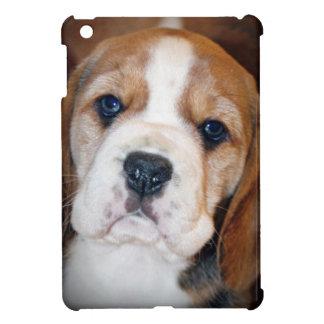 Amor adolescente del beagle