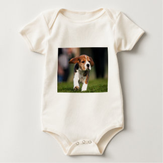 Amor adolescente del beagle enterito