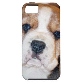 Amor adolescente del beagle iPhone 5 funda