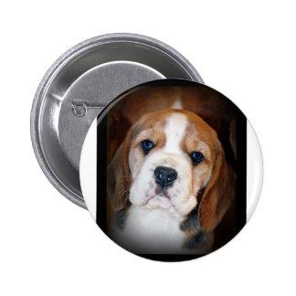 Amor adolescente del beagle pin redondo de 2 pulgadas