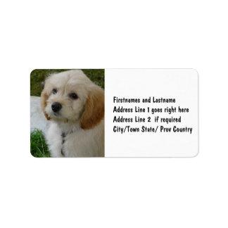 Amor adolescente - foto linda del perro de MaltiPo Etiqueta De Dirección
