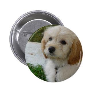 Amor adolescente - foto linda del perro de MaltiPo Pin