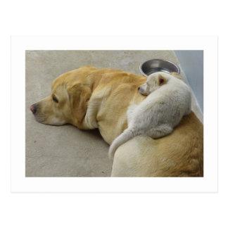 Amor adolescente - Labrador y perrito mezclado de Postales