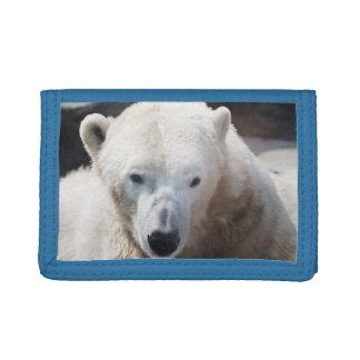 Amor animal lindo del destino de la paz del oso po