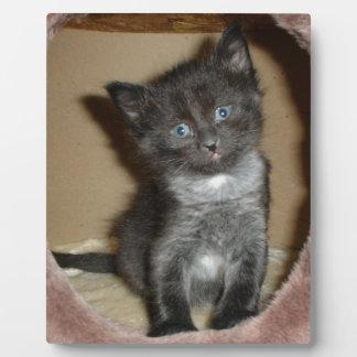 Amor borroso lindo del gatito del bebé placas de madera