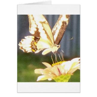 amor butterfliy tarjeta de felicitación