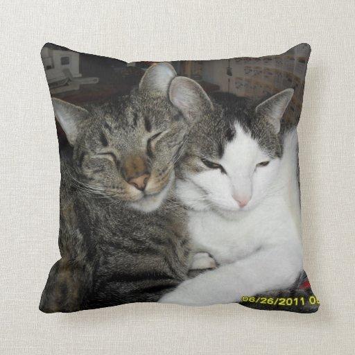 ¿Amor conseguido? almohada del gato