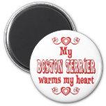 Amor de BOSTON TERRIER Iman