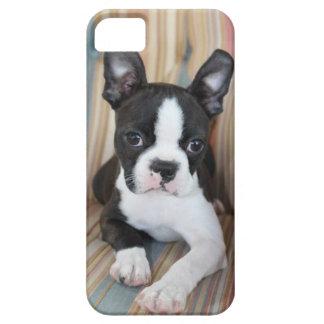 Amor de Boston Terrier iPhone 5 Carcasa