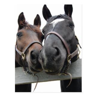 Amor de caballo - besos postal