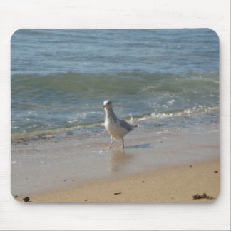 Amor de la gaviota de la playa de Montauk Alfombrilla De Ratones