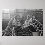 Amor de la jirafa posters