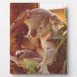 Amor de la koala placa de plastico