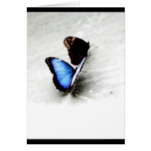Amor de la mariposa tarjeta de felicitación